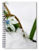 Scilla On Snow Spiral Notebook