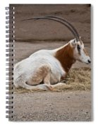 Scimitar Horned Dammah Spiral Notebook
