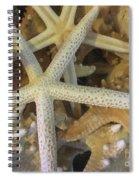 Starfish Treasure Spiral Notebook