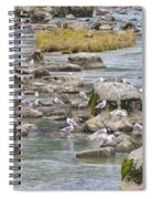 Seagulls On The Rocks Spiral Notebook