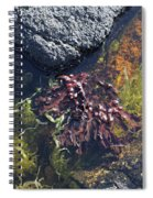 Seaweed Growing In A Rockpool On The Shore Roundstone County Galway Ireland Spiral Notebook