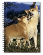 Shiba Inu And Her Puppy Spiral Notebook