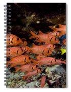 Shoulderbar Soldierfish Spiral Notebook