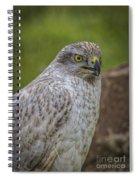 Siberian Goshawk 2 Spiral Notebook