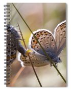 Silver-studded Blue Butterflies Spiral Notebook
