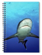 Silvertip Shark Spiral Notebook