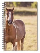 Single Horse Spiral Notebook