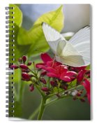 Southern White Butterfly  Spiral Notebook