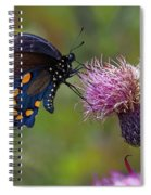 Spicebush Swallowtail On Bull Thistle Spiral Notebook