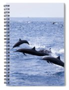 Spinner Dolphins Spiral Notebook