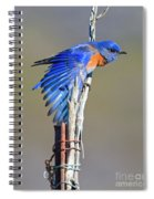 Spread The Wings Spiral Notebook
