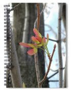 Spring Whirligig Spiral Notebook