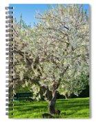 Springtime Blossoms Spiral Notebook