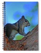 1- Squirrel Spiral Notebook