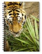 Stalking Tiger Spiral Notebook