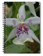 Star Flower Spiral Notebook