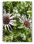 Stemless Carline Thistle Carlina Acaulis Spiral Notebook