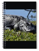 Sunning Gator Spiral Notebook