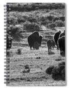 Sunset Bison Stroll Black And White Spiral Notebook