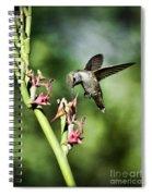 The Hummingbird  Spiral Notebook