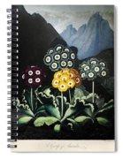 Thornton: Auriculas Spiral Notebook