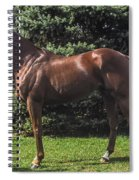 Thoroughbred Stallion Spiral Notebook
