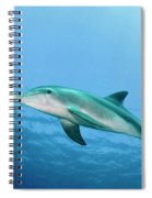 three year old Dolphin  Spiral Notebook