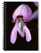 Tick Trefoil Spiral Notebook