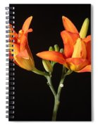 Tiger Lily Flower Opening Part Spiral Notebook