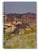 Toad Spiral Notebook