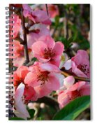 Toyo-nishiki Quince Spiral Notebook
