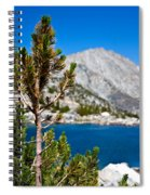 Treasured Pine Spiral Notebook