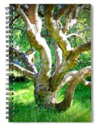 Tree In Golden Gate Park Spiral Notebook