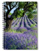 Tree In Lavender Spiral Notebook