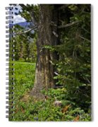 Tree In Vail Spiral Notebook