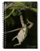 Tree Snake Eating Gecko Spiral Notebook