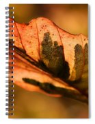 Tri-color Beech In Autumn Spiral Notebook