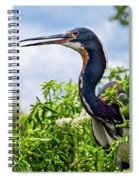 Tri-colored Heron Spiral Notebook