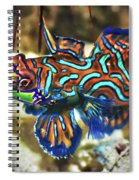 Tropical Fish Mandarinfish Spiral Notebook