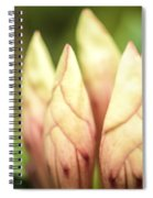 Tropical Garden 7 Spiral Notebook