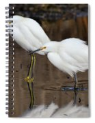 Two Snowy Egrets Spiral Notebook
