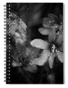 Vanishing Beayty Of Hepatica Spiral Notebook