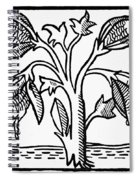 Vegetable Lamb Myth Spiral Notebook