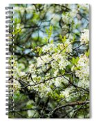 Vermont Apple Blossoms Spiral Notebook