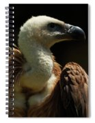 Vulture. Gyps Fulvus Spiral Notebook