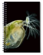 Water Fleas Simocephalus Sp., Lm Spiral Notebook