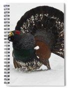 Western Capercaillie Spiral Notebook