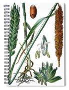 Wheat, Triticum Vulgare Spiral Notebook