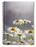 White Daisies Spiral Notebook