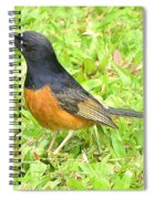 White-rumped Shama Spiral Notebook